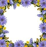 Wild flowers frame Stock Photos