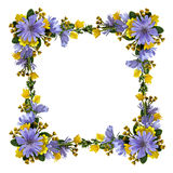 Wild flowers in a frame Royalty Free Stock Photo