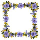 Wild flowers in a frame Stock Images