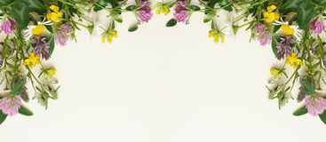 Wild flowers frame. On white paper background. Top view, flat lay Stock Photo