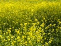 Wild flowers. In full bloom in spring Stock Image
