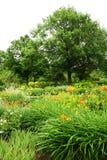Wild flowers in garden Stock Image