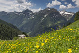 Wild flowers in the German alps Stock Image