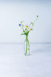 Wild flowers in glass bottle Royalty Free Stock Photo