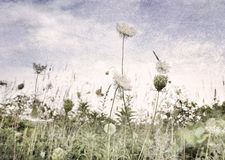Wild Flowers And Grass Stock Images