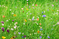 Wild flowers and grass Stock Photo