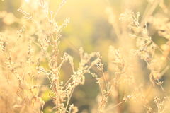 Wild flowers and grass royalty free stock images