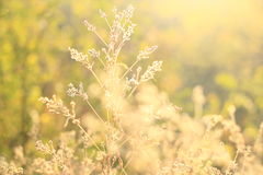 Wild flowers and grass stock image