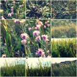 Wild flowers in the grass collage of colorized images, set of toned pictures summertime vitality Royalty Free Stock Photography