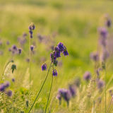 Wild flowers and grass Royalty Free Stock Photography