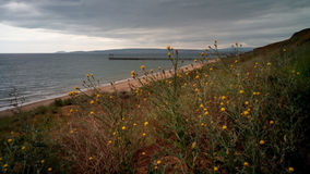 Wild flowers and grass on seashore, Crimea Royalty Free Stock Photography