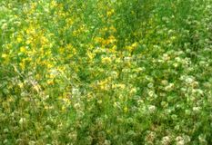 Wild flowers in green field Stock Photography