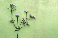 Wild flowers. Wild flowers on green wooden background stock photography
