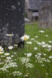 Wild flowers grow in front of a tomb in a graveyard in a traditional village in Dartmoor royalty free stock photography