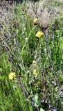 Wild flowers growing in desert royalty free stock photo