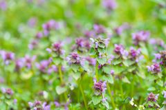 Wild flowers growing on field Royalty Free Stock Photos