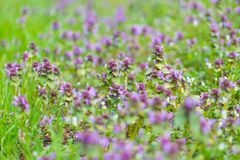 Wild flowers growing on field Royalty Free Stock Image