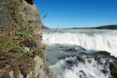 Wild flowers growing on a rock near Gullfoss (Golden falls) wate Stock Photos