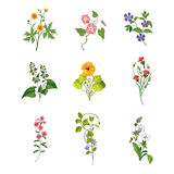 Wild Flowers Hand Drawn Set Of Detailed Illustrations Royalty Free Stock Images