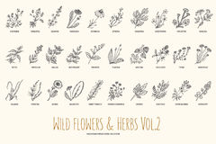 Wild flowers and herbs hand drawn set. Volume 2. Botany. Vintage flowers. Vintage vector illustration. Royalty Free Stock Images