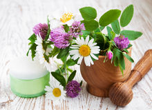 Wild flowers and herbs Royalty Free Stock Photos