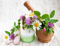 Wild flowers and herbs Stock Photo