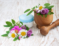 Wild flowers and herbs Stock Images