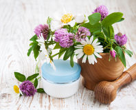 Wild flowers and herbs Royalty Free Stock Images
