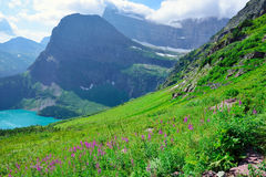 Wild flowers and high alpine landscape of the Grinnell Glacier trail in Glacier national park, montana Royalty Free Stock Photos