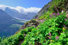 Wild flowers and high alpine landscape of the Grinnell Glacier trail in Glacier national park, montana Stock Photo