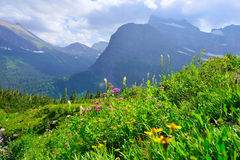 Wild flowers and high alpine landscape of the Grinnell Glacier trail in Glacier national park, montana Stock Photography