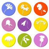 Wild flowers icons set Stock Images