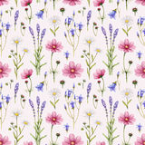 Wild flowers illustration stock illustration