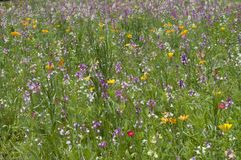 Wild Flowers. An image of wild flowers Royalty Free Stock Photo