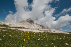 Wild Flowers In The Plateau Of Pale On Summer Day, Trentino, Italy Stock Photography