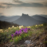 Wild flowers irises against the backdrop of mountain peaks. Royalty Free Stock Photo