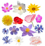 Wild flowers isolated. Many flowers isolated. Chamomile, sunflower, dandelion, poppy, snowdrop, cornflower, wild geranium, carnation on the white background stock images