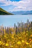 Wild Flowers at Lake Tekapo. On a beautiful summer day, Canterbury Region, New Zealand, South Island Stock Image
