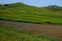 Wild Flowers Landscape Stock Photography