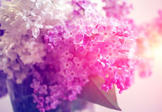Wild flowers lilac at sunset. Wild flowers lilac bush in the blurry background at sunset Royalty Free Stock Image