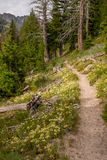 Wild flowers line a hiking trail in the rugged Idaho mountains. Beautiful country surround a hiking trail in the high mountains stock image