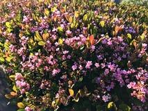 Wild flowers on the malibu beach Stock Photo
