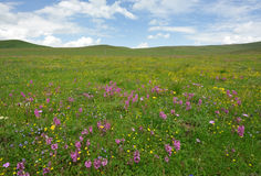 Wild flowers in the meadow Royalty Free Stock Photos