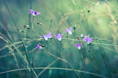 Wild flowers in a meadow Royalty Free Stock Photography