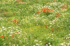 Wild flowers in meadow Stock Photos