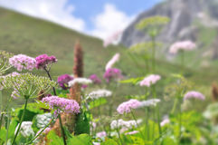 Wild flowers in meadow Stock Images
