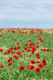Wild flowers meadow and blue sky Royalty Free Stock Images