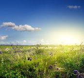 Wild flowers in the meadow in the early morning Stock Photos