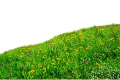 Wild flowers in the meadow Stock Photos