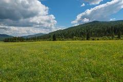 Wild flowers meadow mountains Royalty Free Stock Photo